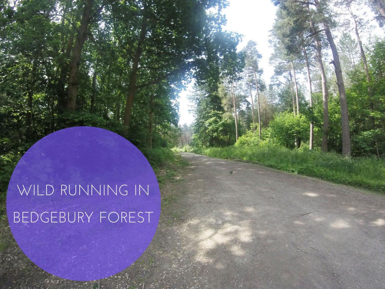 Wild Running Bedgebury Forest